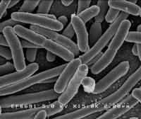 Batteri: piccole mutazioni, grande antibiotico-resistenza