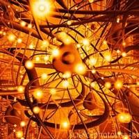 Matematica, reti e scelte biologiche