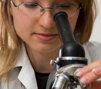 Un modello per lo studio dello sviluppo embrionale