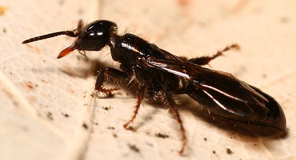 La matematica umida dell'evoluzione #3: Una vita da insetti