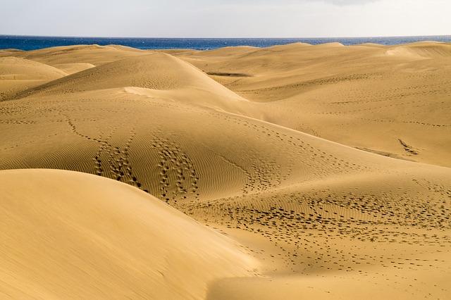 Sabbia e ferrovie: si fa dura la vita per i cammelli!