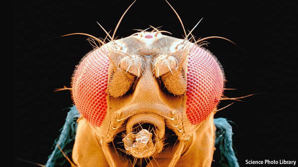 Far saltare la mosca al naso (di Turing)