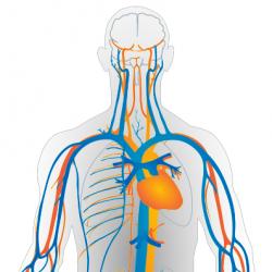 Modelli matematici e metodi computazionali per il sistema cardiovascolare
