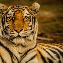 Nuovo modello matematico combatte l'estinzione delle specie
