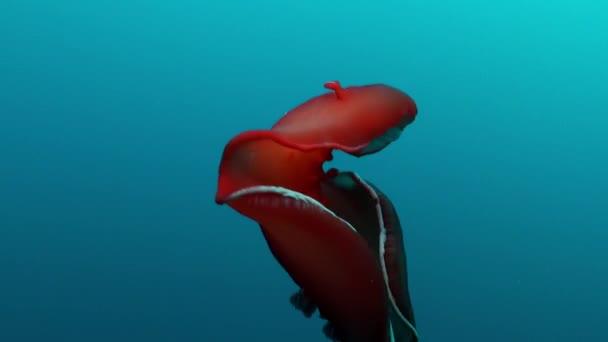 Creare nuovi robot flessibili grazie alla… lumaca di mare