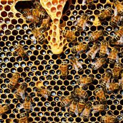 Anche le api sono matematiche!