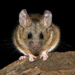 La matematica svela perché gli animali vedono di notte