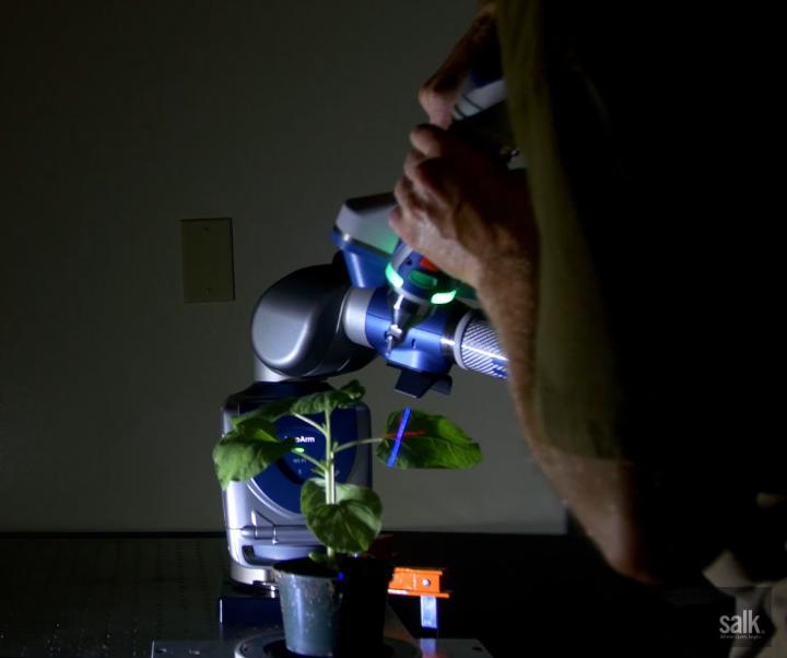 Algoritmi per studiare meglio… le piante