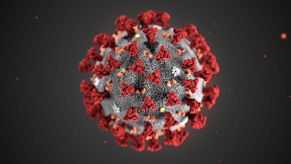 Esponenziali e coronavirus