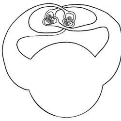 La sfera selvaggia di Alexander - La matematica danzante, Episodio 2