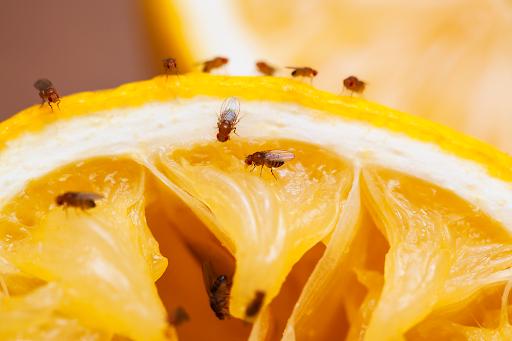 L'uomo e il moscerino della frutta apprendono in modo simile