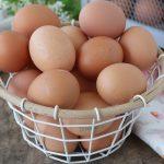 Trovata la formula universale dell'uovo: un piccolo passo per un uovo, un grande passo....